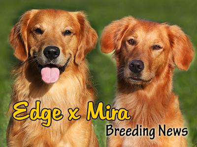 Edge x Mira Puppy News